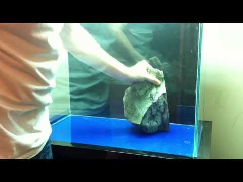 How to set up an Tanganyikan Cichlid Tank - Shell Dwellers