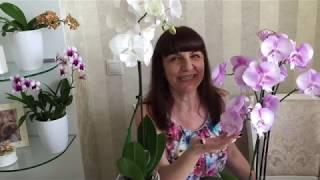 Бомбезные орхидеи : Леко Фантастик, Каода, Беллина, Шиллериана, Психопсисы))))