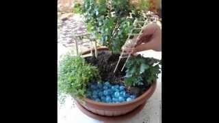 видео Мини-сад в горшке (45 фото): садик своими руками, растения, цветы для миниатюрного, цветочные композиции камней