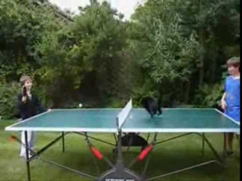 Thumbnail for Cat Video ping pong cat