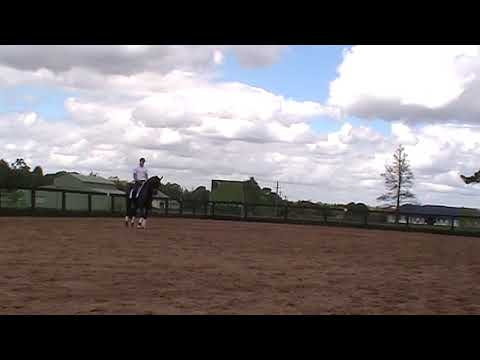HerzAssW (imported Trakehner Verband Premium State Mare) Stefan Wolfe Clinic day3