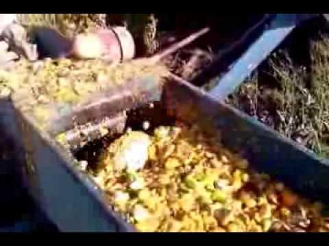 Засолка сельди в пластиковой бутылке - YouTube