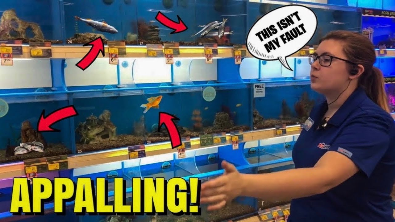 What I Found In Petsmart Fish Tanks Youtube