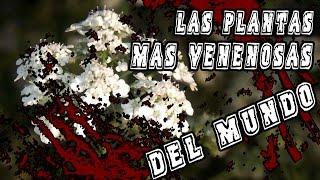 Las-9-Plantas-MÁS-VENENOSAS-del-Planeta