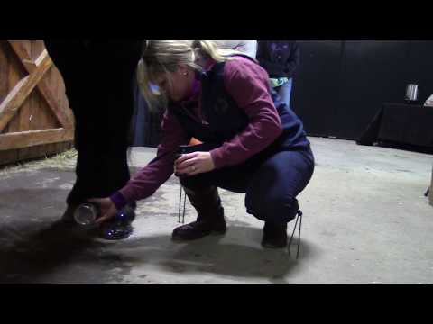 How To Glitter Your Horse's Hooves with Sandra Beaulieu