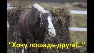 Шорт-лист заблуждений будущего коневладельца. Что владельцу