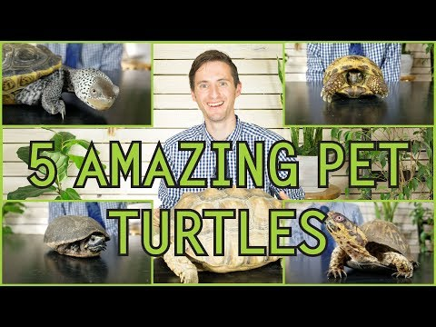 Five Of The Best Pet Turtles You Could Possibly Get!