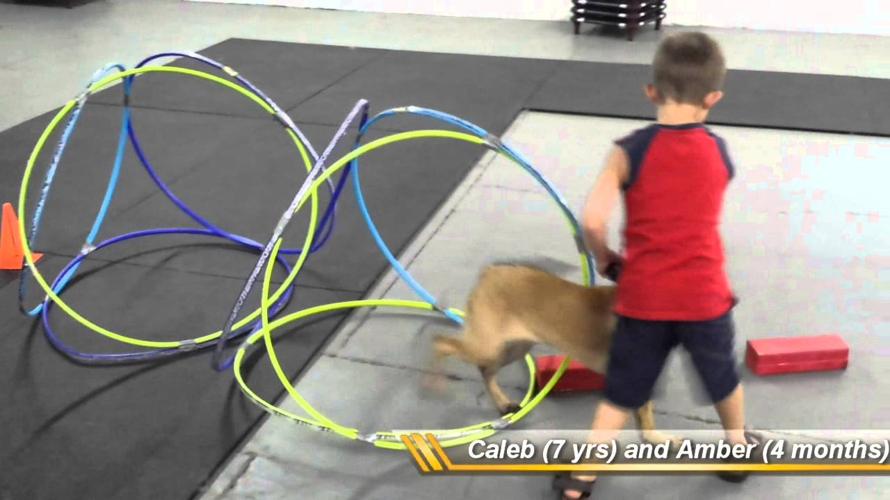 Puppy and Junior trainer do obstacle course - YouTube