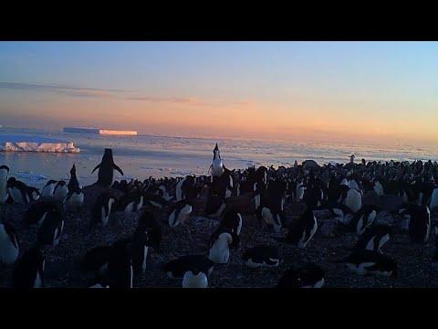 1.5 million penguins discovered on remote Antarctic islands