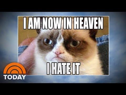 Grumpy Cat: World Bids Farewell To Meme Sensation | TODAY