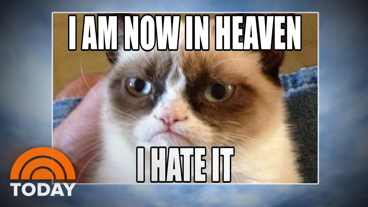 Grumpy Cat World Bids Farewell To Meme Sensation Today