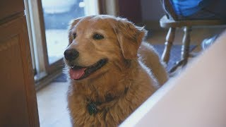 Wisconsin Life: Meet Olive, A Service Dog