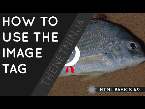 HTML Tutorial For Beginners 09 - The Img Tag
