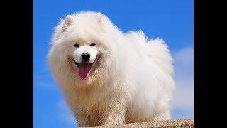 ТОП20 Самые дорогие собаки в мире #ТОП20