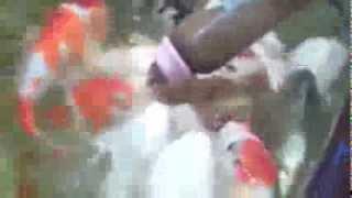 Кормление карпов с соски