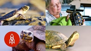 Turtles and Tortoises: Stories of Our Friends in Shells thumbnail