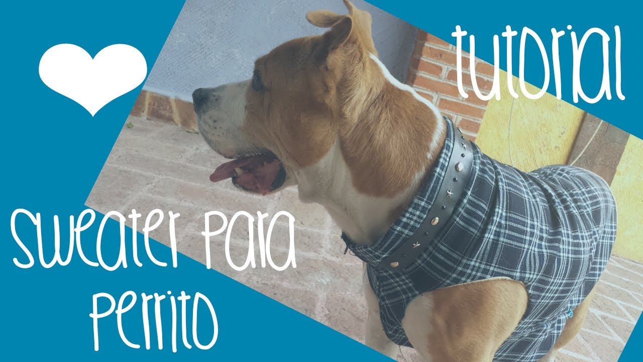 C mo hacer un sweater chaleco para perro youtube for Chalecos para perros