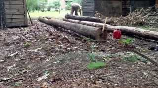 Building A Log Bridge Part 2