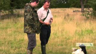 Gun Dog Training With Tony Price Professional Gundog Trainer