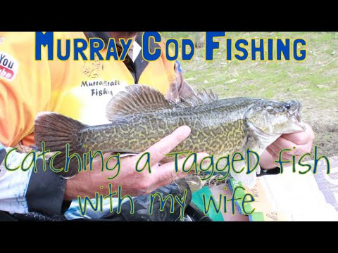 Murray Cod Fishing, Catching A Tagged Fish With The Wife