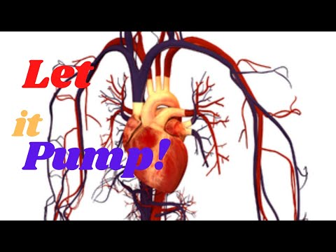 How Circulatory System Works