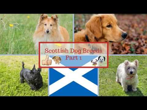 Scottish Dog Breeds Part 1