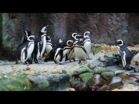 The Jacksonville Zoo and Gardens | Visit Jacksonville