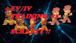 EV/IV TRAINING #1 SCRAFTY_ROBLOX:PROJECT POKEMON