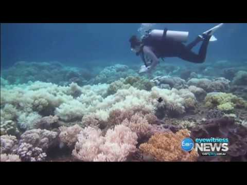 Worst assessment: Great Barrier Reef after back-to-back coral bleaching