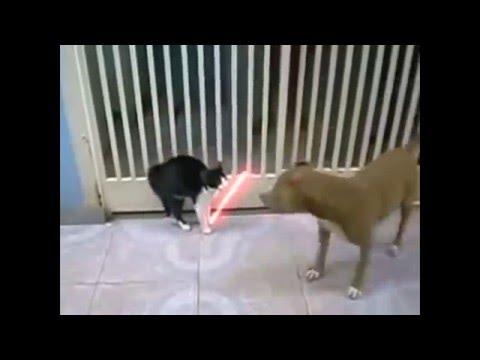 Dog vs. Cat, Very Funny