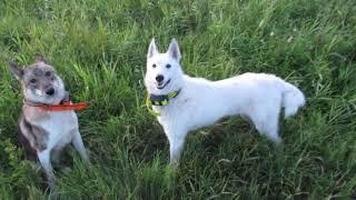 Первая охота Каюра и Ханты