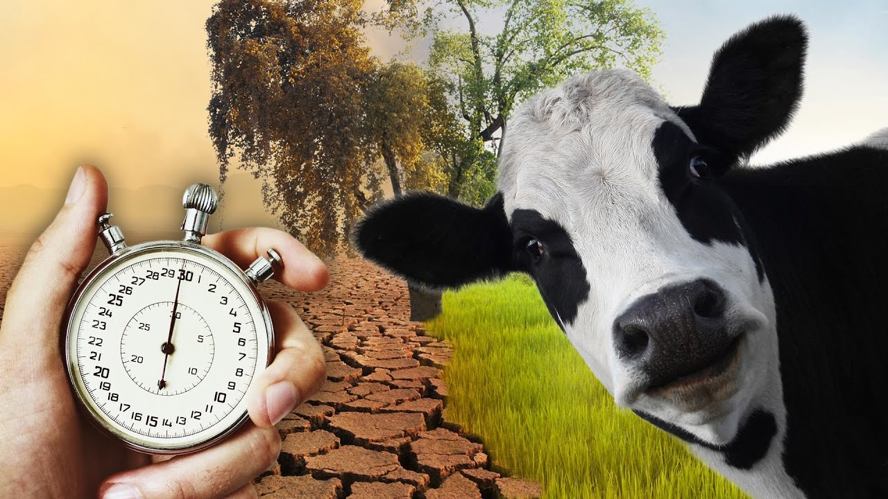 The Truth About Dairy - In 2 Minutes