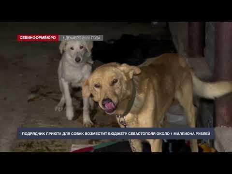 НТС Севастополь: Подрядчик приюта для собак возместит бюджету Севастополя около 1 миллиона рублей