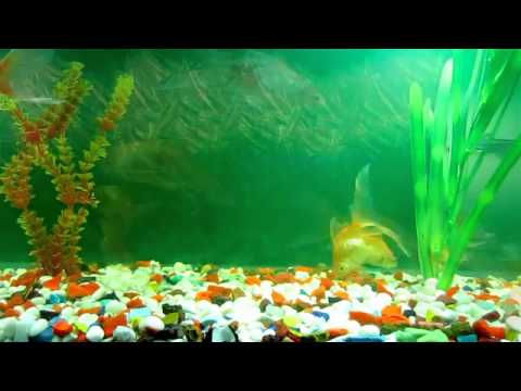 Youtube animated wallpaper and desktop backgrounds for Moving fish for cats