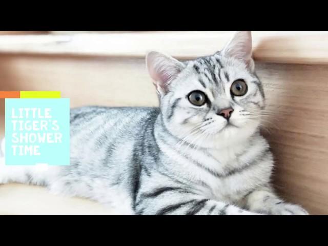 Cute little kitten Tiger First Warm Bath to look Fluffy