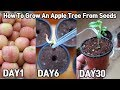 Eng Sub 사과 사 먹고 공짜로 모종 얻는 방법!ㅣHow To Grow An Apple Tree From Seeds