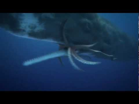 COLOSSAL SQUID (giant squid ) Vs. SPERM WHALE