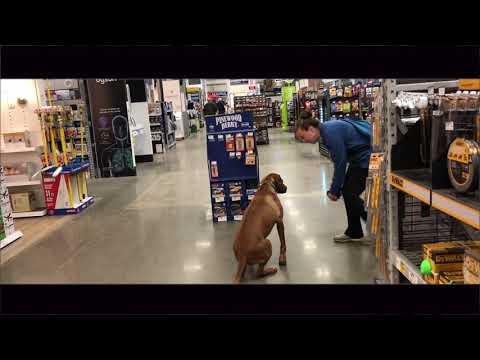 1 Yr old Rhodesian Ridgeback, Nala | Jumping Dog Training | Greenville Dog Trainers