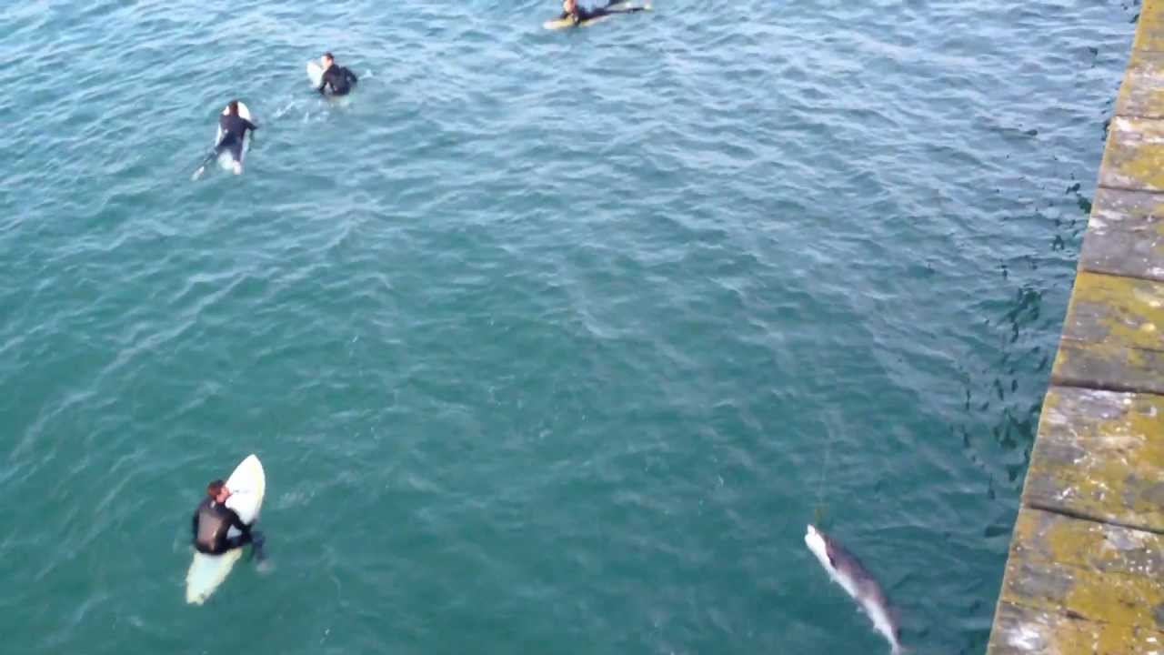 Shark attacks woman wading in ocean with friends off Calif ...