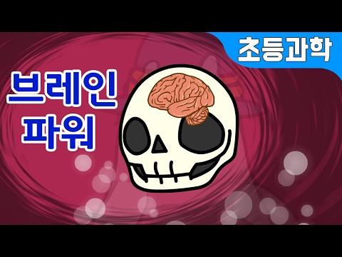 브레인 파워! 1.4kg 우리 뇌를 깨우면 머리가 좋아지나요? 뇌에 관한 Best 상식 | 지니키즈★초등과학