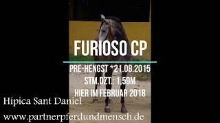 Verkaufspferd Furioso CP - PRE-Hengst *21.08.2015, Stm. 1,59m