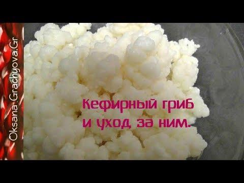 Как сделать кефир из кефирного гриба в домашних условиях
