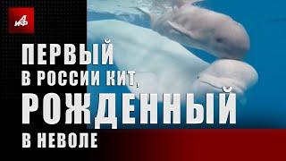Первый в России кит, рожденный в неволе