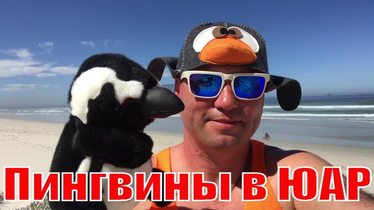 Отдых Пингвины в ЮАР. Pingyin ice party