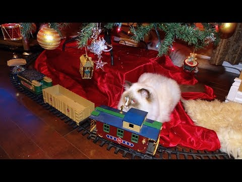 Starting The Christmas Holiday's With 8 Ragdoll Kitties