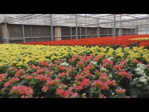 Fiori E Vini A Ruvo: Visita Alla Florpagano Leader Nella Produzione Di Orchidee E Begonie