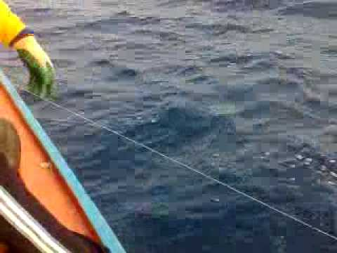 Pancing Ikan Tongkol