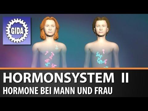 GIDA - Hormonsystem II - Hormone bei Mann und Frau - Biologie ...