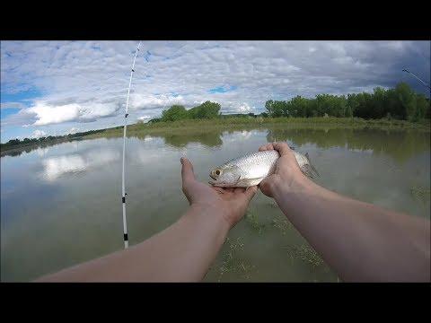 NEVER CAUGHT ONE OF THESE! Catfish, Drum, Goldeye Fishing!