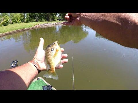 Bluegill Fishing On Lake Guntersville - How To Catch Bluegill